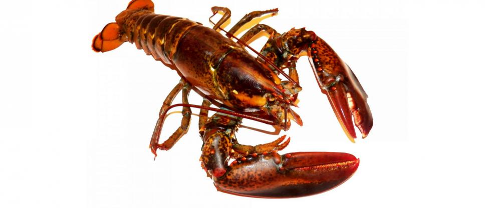 Jon Bon Jovi Meets His Lobster